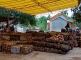 Kondisi UPPB Bayung Lencir yang mengalami penurunan drastis produksi karet